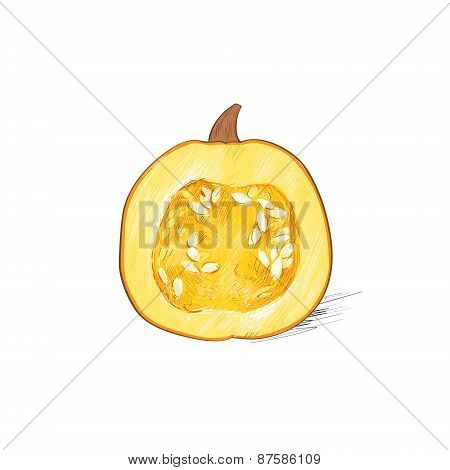 pumpkin half cut sketch draw isolated over white background