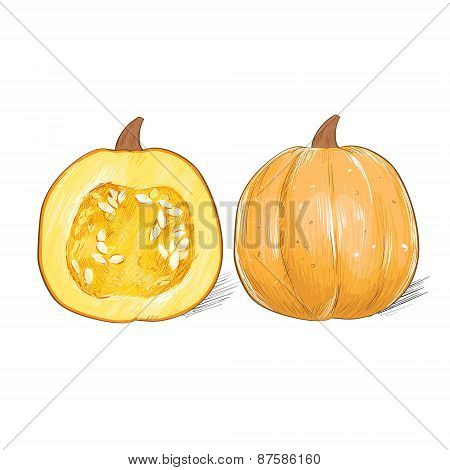 pumpkin sketch draw isolated over white background