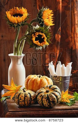 Sunflower & Gourds Still Life