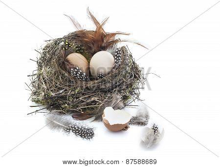 Bird Nest With Eggs On White Background