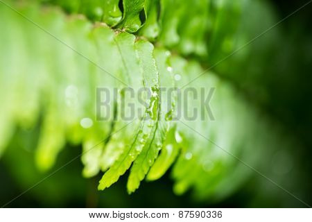 Close Up Of Green Leaf With Rain Drops