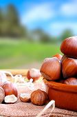 pic of shells  - Group of appetizing hazelnuts in shell and shelled on a wooden table in field vertical composition - JPG