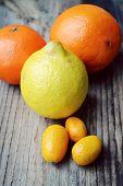 picture of kumquat  - Set of citrus fruits from tangerines - JPG
