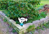 foto of poo  - a signal for dog owners to not pooing in Denmark - JPG