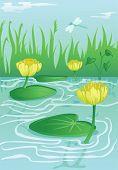 foto of water lilies  - blooming yellow water - JPG