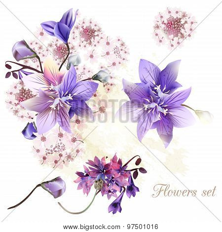 Collection Of Tender Flowers Watercolor Style