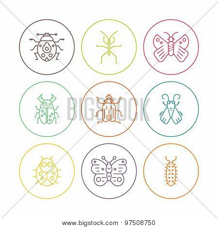 Bugs In Circles