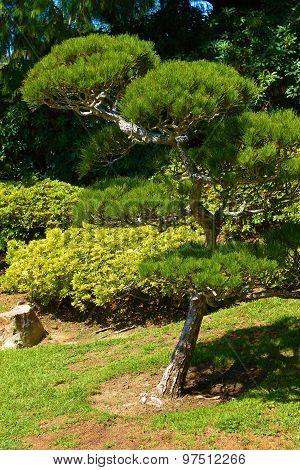 Zen Botanical Garden