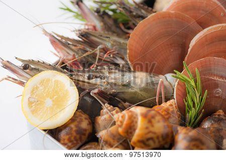 Fresh Sea Food Set