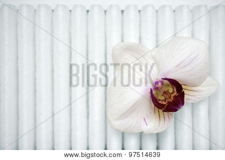 Orchid On Filter