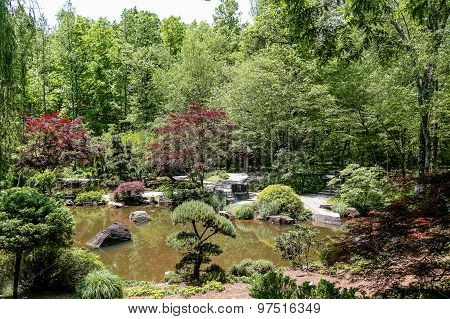 Japanese Maples And Evergreens Around Lake