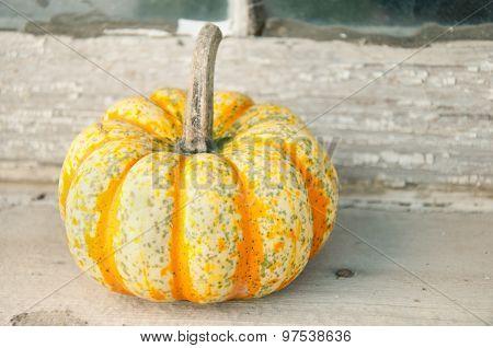 multi colored pumpkin