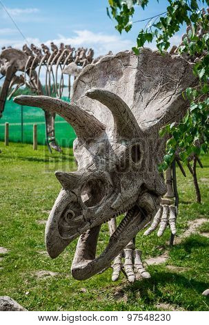 Triceratops Skeleton Outdoors