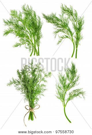 Dill Herb Leaves Isolated On White. Condiment. Food Ingredient