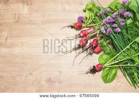 Fresh Radish With Green Garden Herbs. Healthy Food Ingredients