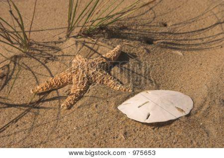Sand Dollar And Star Fish On Beach