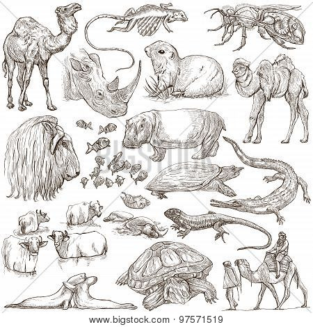 Animals Around The World. Freehand Sketches, Pack