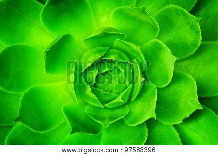 Artificial green flower unfolding, opening with symmetrical petals pattern. Close-up