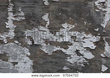 Damaged Tree Peel, Closeup Shot