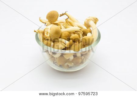 Shimeji mushroom