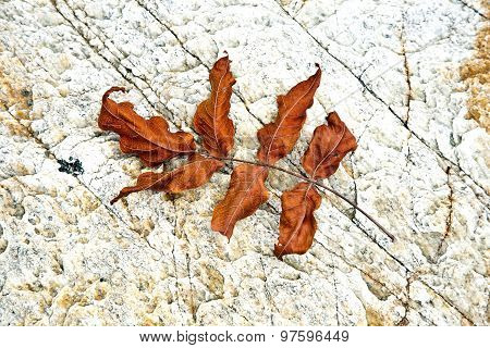 Beautiful Structured Leaves At The Beach Arranged By Nature In A Harmonic Way