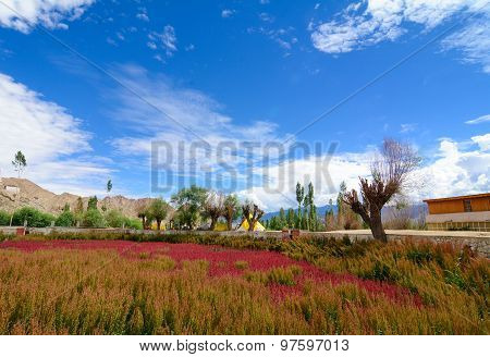 Beautiful Mountains With Flower Field At Leh