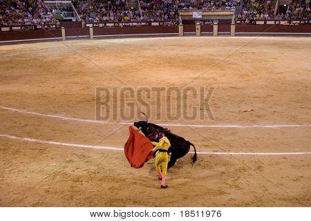 MADRID - AUGUST 8: The torero Antonio Espaliu fights a bull named Colgado in the Las Ventas bullring on August 8, 2010 in Madrid, Spain.