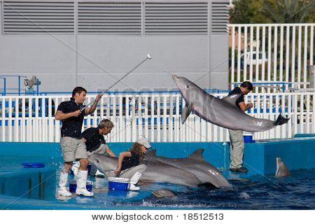 VALENCIA, SPAIN - OCT 24: Dolphin trainers preparing before a show at the Oceanografic, which receives over 1 million visitors each year. The Oceanografic on October 24, 2010 in Valencia, Spain.