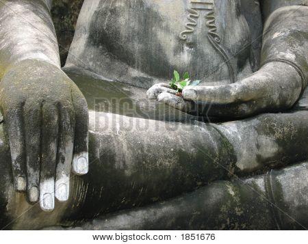 Buddha'S Lap