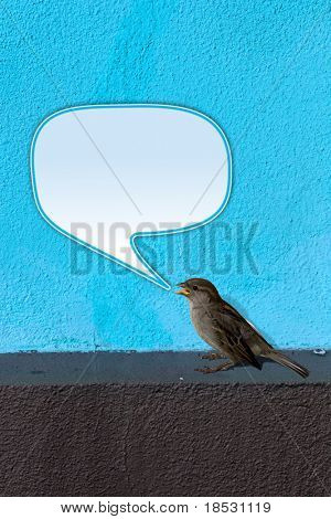 House Sparrow (Passer domesticus) on blue Wall twittering with empty text bubble.