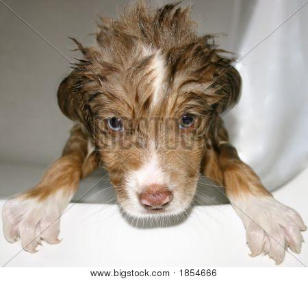 Wet Puppy
