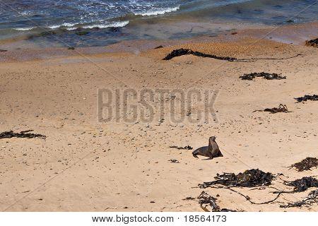 Sea Lion On Beach