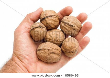 walnuts in hand
