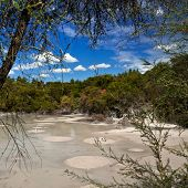Mud Pool in New Zealand