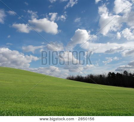 Green Grass And Blue Sky With White Fluffy Clouds