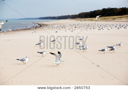 Sea Gulls On The Beach