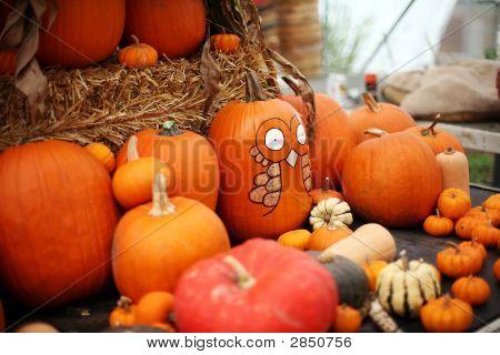 A Plethora Of Pumpkins