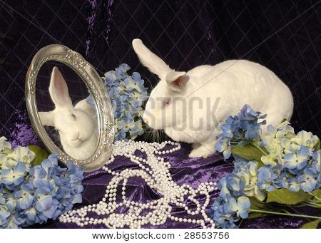 White Rabbit in the Mirror