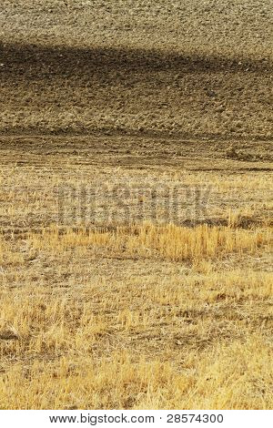 dry grass texture background