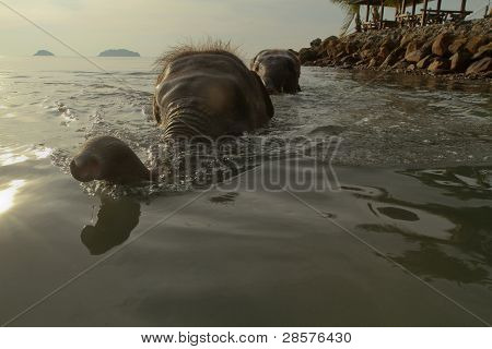 KO CHANG, TRAT/THAILAND - DECEMBER 22:  Bathing elephants in the sea on December 22, 2011 on Ko Chang, Thailand. Nowadays, development of the tourism industry found a new use for elephants in Thailand