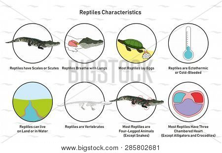 Reptiles Characteristics infographic diagram including