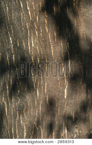 Bark Of Cork Tree Detail (Quercus Suber)