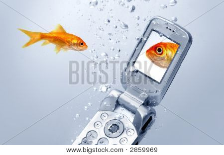 A Goldfish Swims By A Cell Phone