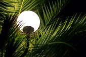 Round Lantern Sinking In The Branches Of The Night Palm Trees. Palm Trees And Lantern At Night. Gree poster