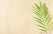 A Branch Of Palm Trees On The Sand Background. Sand Texture Place For Text. Palm Leaves. Sand Beach. poster
