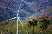 Palm Trees Blowing In The Wind Besides A Wind Turbine Farm At The Rural Coachella Valley Besides Bar poster