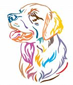 Colorful Decorative Outline Portrait Of Dog Golden Retriever Looking In Profile, Vector Illustration poster