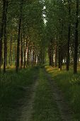 Forest Spring Landscape - Forest Trees With Grass On The Foreground And Sunlight Shining Through The poster