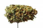 Marijuana. Extreme Close up of Cannabis Flower bud. Prescription Medical and Recreational Dried Mari poster