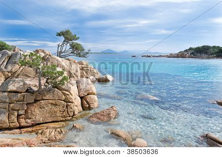 Rocks And Vegetation By The Sea